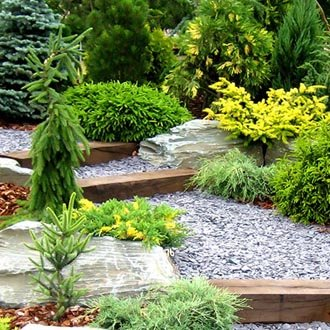 Tress and Shrubs (supply and installation - all sizes)